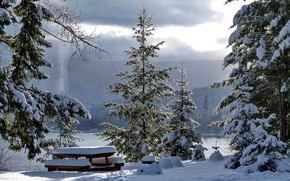 Picture winter, snow, table, tree
