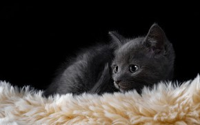 Picture baby, muzzle, fur, kitty, black background