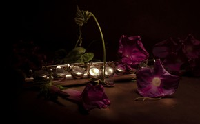 Picture flowers, the dark background, pipe, still life, wind instrument