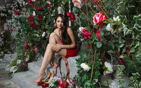Picture look, girl, pose, roses, legs, Isabella