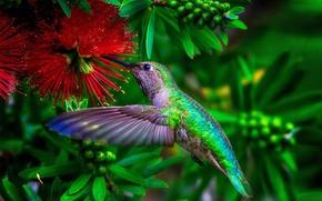 Picture WINGS, FLIGHT, FLOWER, BIRD, PAINTING, HUMMINGBIRD, NECTAR