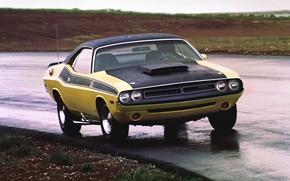 Picture Dodge, Challenger, Rain, Muscle car, Vehicle