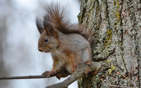 Picture autumn, tree, branch, animals nature, squirrel on a branch