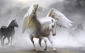 Picture horse, Pegasus, photoart