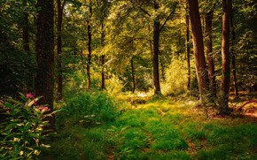 Picture forest, summer, grass, trees