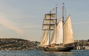 Picture sea, ship, sailboat, Norway, sails, schooner, Golden Lion
