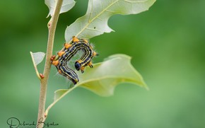 Picture caterpillar, nature, arched