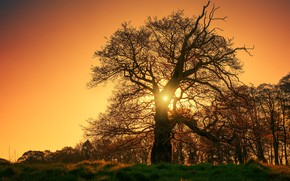 Picture the sky, grass, the sun, rays, light, trees, sunset, branches, tree, glade, orange, sunset