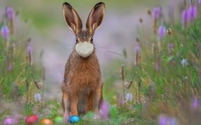 Picture Nature, Grass, Spring, Easter, Eggs, Mask, Holiday, Easter, Holiday, Happy, Coronavirus, Covid-19, Пандемия, Крашеные, Пасхальный …