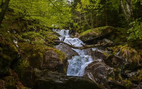 Picture forest, stream, stones