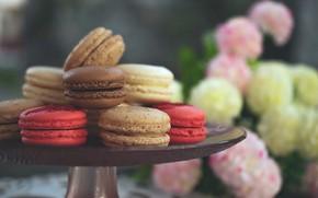 Picture cookies, sweet, dessert, macaron, almond