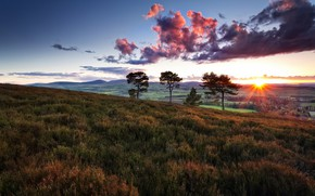 Picture field, summer, the sky, trees, nature, morning