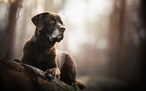 Picture portrait, dog, bokeh