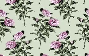 Picture flowers, background, Wallpaper, Flowers, vintage, Wallpaper, Vintage, Camellia