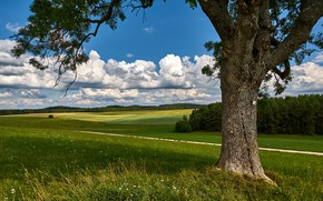 Picture road, greens, field, summer, grass, clouds, branches, blue, tree, meadow, trunk