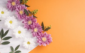 Picture leaves, flowers, chrysanthemum