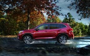 Picture rain, Subaru, crossover, Forester, 2019