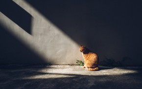 Picture cat, cat, rays, light, the dark background, wall, red, sitting