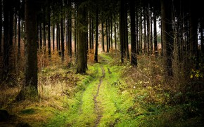 Picture road, forest, nature, beauty