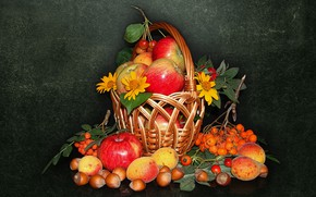 Picture nature, mood, basket, apples, beauty, nuts, beautiful, beautiful, Rowan, beauty, harmony, the Wallpapers, apricots, cool, …