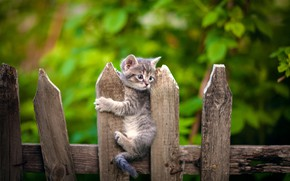 Picture the fence, baby, kitty, bokeh