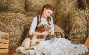 Picture girl, smile, hay, red, lamb, redhead, sheep, braids, lamb, Диана Липкина