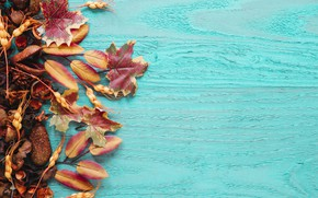 Picture autumn, leaves, background, tree, colorful, fruit, wood, background, autumn, leaves, dried fruits, maple