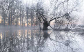 Picture nature, fog, lake