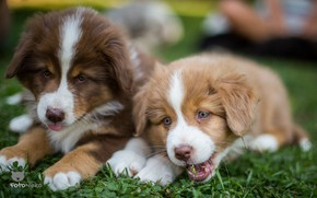 Picture puppies, funny, breed