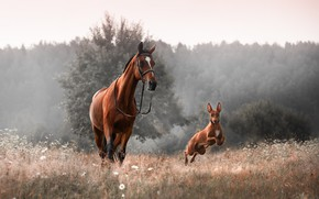 Picture animals, grass, nature, fog, horse, dog, morning, dog