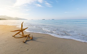 Picture sand, sea, beach, star, summer, beach, sea, sea, sand, starfish