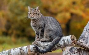 Picture cat, background, log, bokeh, cat