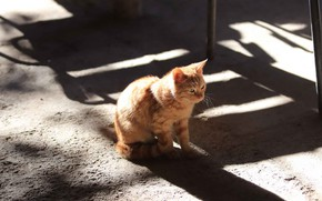 Picture cat, light, kitty, baby, red, shadows, kitty, the sidewalk