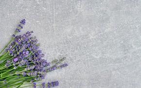 Picture flowers, bouquet, lavender