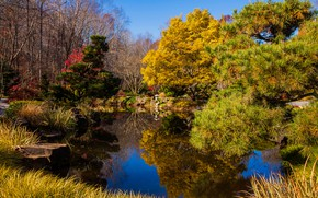 Picture autumn, the sky, grass, water, the sun, trees, pond, Park, reflection, stones, USA, the bushes, ...
