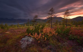 Picture forest, the sky, trees, sunset, mountains, shore, the evening, pond