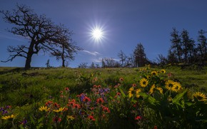 Picture trees, flowers, meadow, Oregon