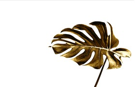 Picture sheet, style, gold, white background, gold, style, leaf, monstera, monstera, by Pyrus-acerba