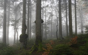 Picture autumn, forest, fog, moss, pine, growths