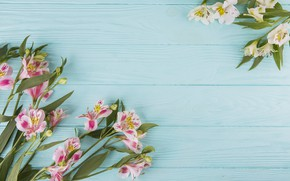 Picture flowers, colorful, wood, pink, flowers, beautiful, spring, lily