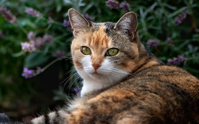 Picture cat, look, pose, background, portrait, garden, lies, motley