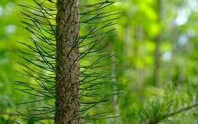 Picture macro, tree, green, needles, pine