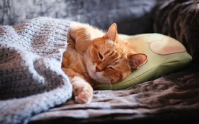 Picture cat, cat, face, comfort, sofa, sleep, paws, blanket, red, sleeping, pillow, home, closed eyes