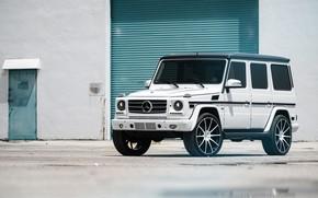 Picture Mercedes, Classic, White, G500, W463