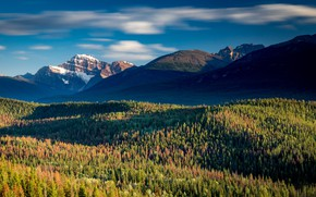 Picture forest, mountains, Canada, Albert, Jasper national Park