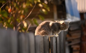 Picture on the fence, in the village, grey cat