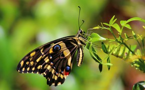 Picture macro, butterfly, plant