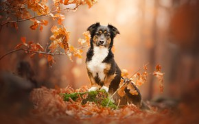 Picture autumn, branches, stump, dog, bokeh