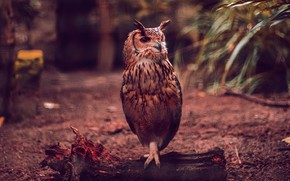 Picture the dark background, owl, bird, log, bokeh, owl