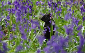 Picture flowers, glade, spring, protein, black, bells, lilac